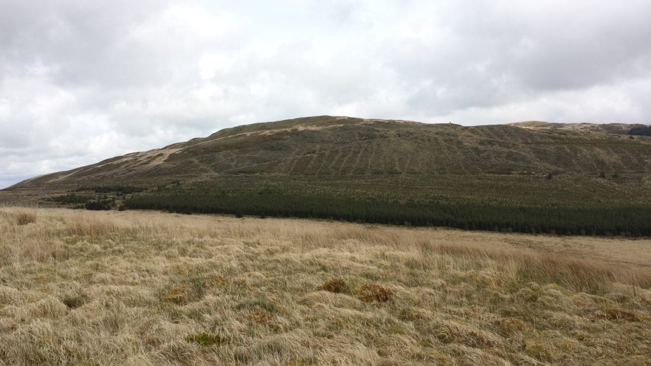 View of recently replanted spruce on public forestry land, taken from Cefn Coch