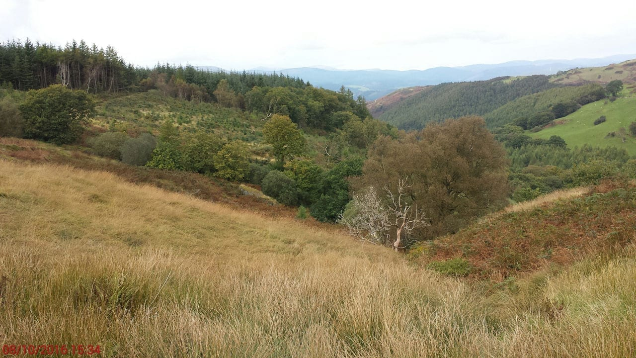 Cefn Coch trees at north boundary