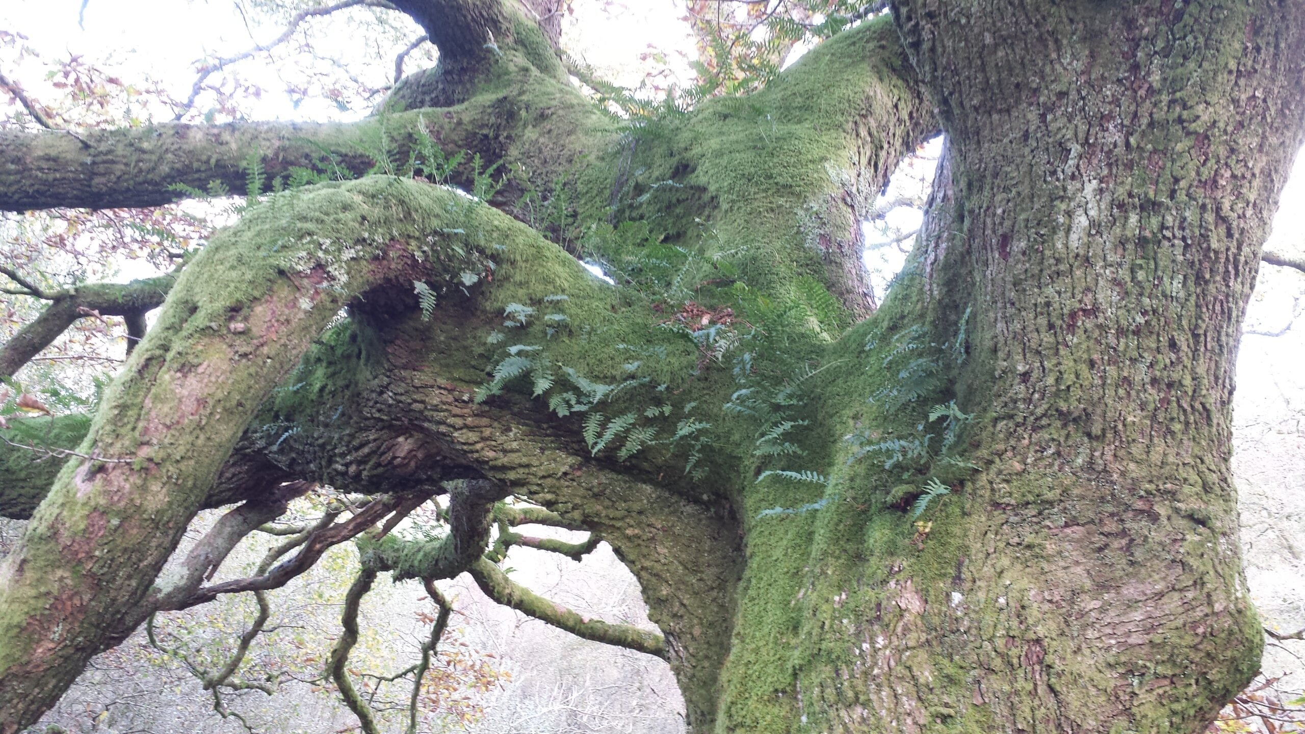 Moss and ferns on tree